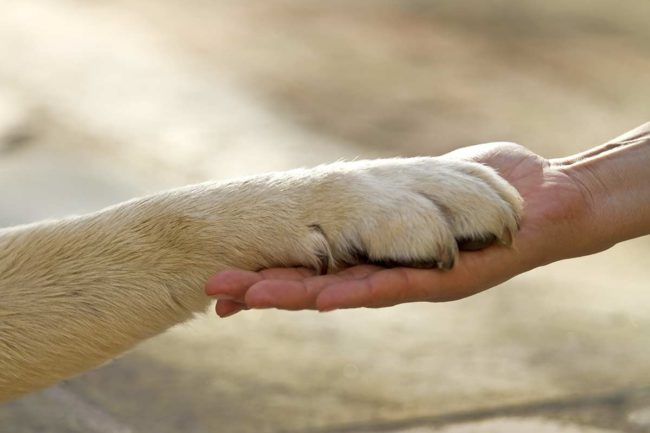 an example of animal assisted therapy